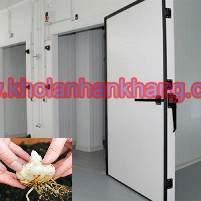 Kho lạnh bảo quản củ hoa ly